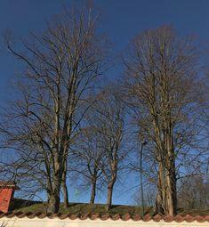 Snydeforår i haven Trunks, Plants, Heavens, Drift Wood, Tree Trunks, Plant, Planets