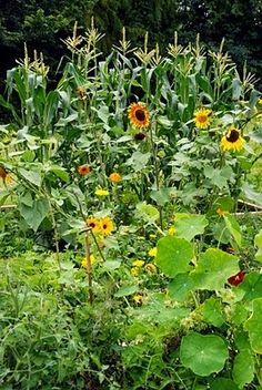 A list of flowers you might want to plant in with your veggies and why