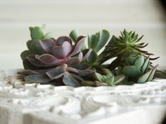 succulent garden in frame planter <3 at { https://www.etsy.com/listing/175547410/succulent-garden-in-upcycled-and?ref=shop_home_active_1 }