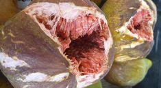 Így nevelhetsz fügefát kertedben Cabbage, Beef, Vegetables, Garden, Meat, Garten, Lawn And Garden, Cabbages, Vegetable Recipes