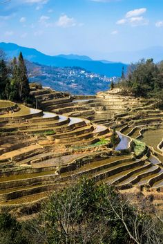 A a review of Sapa, Vietnam trekking - staying, eating, and living amongst hill tribes. An unforgettable adventure amongst Vietnam's famous rice terraces.