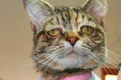 Tucker, la chatte la plus triste du monde Cool Cats, I Love Cats, Funny Cats, Funny Animals, Cute Animals, Crazy Cat Lady, Crazy Cats, Cat Magazine, Gatos Cat