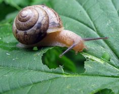 Best 11 Protect your plants from snails. Ι 1 part white vinegar - 1 part water. Organic Gardening, Gardening Tips, Vegetable Gardening, Logo Color Schemes, Vinegar Uses, Garden Pests, Beautiful Gardens, Beautiful Roses, Garden Art