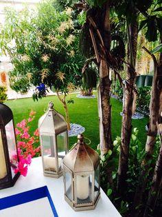 palm-tree-garden