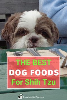 One of the biggest culprits when it comes to Shih Tzu allergies is the dog food that your pup eats. There  are commercial dog foods specifically made for dogs that suffer from allergies.  And changing his diet may be just what he needs.  Here are 12 brands of dog foods for Shih Tzu with allergies #everythingshihtzu #dogfood #dogallergies Baby Shih Tzu, Shih Tzu Puppy, Shih Tzus, Cutest Small Dog Breeds, Best Small Dogs, Shitzu Puppies, Havanese Dogs, Puppy Food, Puppy Treats
