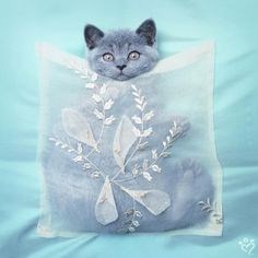 New! Attractively packaged kittehs to go!