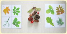 """На улице дождь, поэтому мы с Главным Читателем играем дома. А коробочка с крупами заполнилась кусочками осени. Делаем сенсорные коробки из осенних подручных материалов Кормим белку орехами, строим ей жилье и т.д. Играем в """"найди лишний"""" по различным признакам (форма, размер) Также можно… Autumn Crafts, Reggio Emilia, Kids Decor, Plastic Cutting Board, Diy And Crafts, Homeschool, Education, Fall, Birthday"""