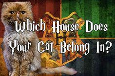 Which Harry Potter House Does Your Cat Belong In?