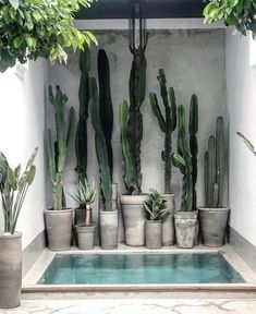 For cactus lovers everywhere via 🌵 📷 / design at . Outdoor Spaces, Outdoor Living, Kleiner Pool Design, Plant Decor, Cactus Plants, Cactus Art, Cactus Flower, Succulents Garden, Cactus Drawing