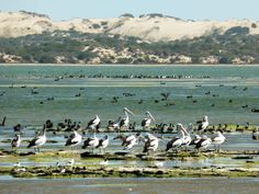 What a wonderland, nature, birdlife, south australia, coorong