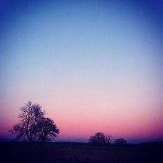 Sky blush. #blush #pink #sky #evening #dusk #tree #treeline #skyatnight #nightfall #nighttime #evening #silhouette #sky #blue #beautiful #landscape #horizon #exotic #england #uk #hampshire