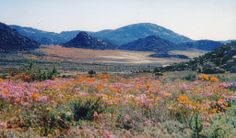 Goegap Nature Reserve, Namaqualand, Northern Cape Province, South Africa