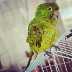 """Pássaros"" por @ tayanamoreira"