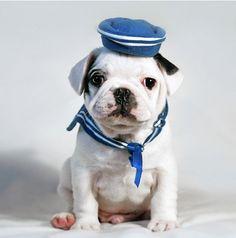 sailor puppy
