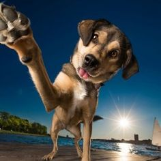 The Inspirational Interview With Professional Dog Photographer Kaylee Greer | KelbyOne