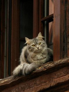 Every house and shop in every small English village should have a Window Cat like this one.