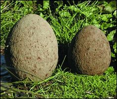 Hypertufa garden eggs -- and tuck them into a barbed wire nest for garden spot interest.