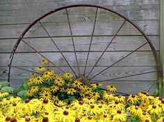 Old wagon wheel and black eyed susans.....