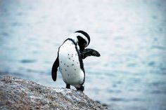 CAPE TOWN :: Boulders Beach : 5 | Flickr - Photo Sharing! http://www.flickr.com/people/crystiancruz/