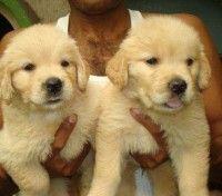 Buy & Sale Pets @ zazspot.com