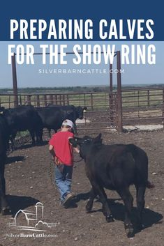 Preparing Calves for the Show Ring Livestock Judging, Showing Livestock, Cow Tipping, Show Steers, Show Cows, Raising Cattle, Teacup Pigs, Dairy Cattle, Show Cattle