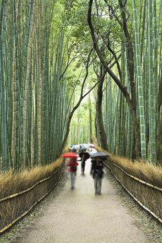 Hoy nos gustaria estar en los bosques de bambú de Japón