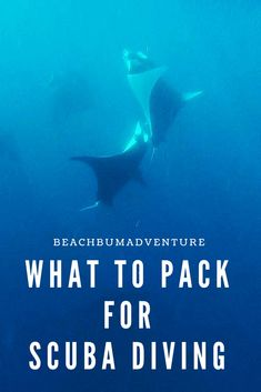 pack for scuba What to take scuba diving in asia top dive destinations in tropical, warm water seas oceans. Essential items and packing list guide for useful dive accessories to take on dive boats like gopros and red filters. Diver information tips advice