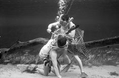 Ricou Browning being cut out of net by another diver as part of a safety demonstration at Silver Springs. Photo by Bruce Mozert. Chicago Photos, Black Lagoon, Image Title, Lifeguard, Browning, Fashion Photo, Underwater, Safety, Creatures