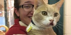 12 Year Old #Cat Living with Swollen Mouth for Years Begins to Heal After #Adoption.. #AdoptDont Shop