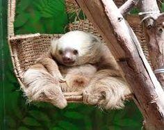 Yay Sloths!