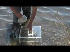 How To Catch Live Poddy Mullet [ Live Bait ] - REEL IT IN - YouTube