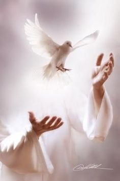 Jesus sends us a peace dove Jesus sendet uns eine Friedenstaube Spirit Of Truth, Holy Spirit, Keep Praying, He First Loved Us, Pray Without Ceasing, Peace Dove, Jesus Loves You, Shades Of White, Music Love