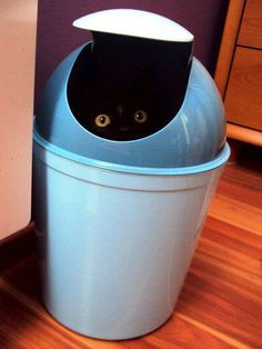 Black cat in bin
