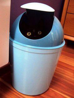 Black cat in bin