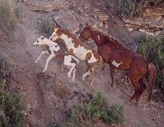 Trio of horses climbing Baby Horses, Wild Horses, Most Beautiful Animals, Beautiful Horses, Pretty Horses, Horse Love, Wilde Mustangs, Animals And Pets, Cute Animals