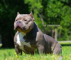 """The Infamous """"Slim Thug"""" of OverTime Bullies"""