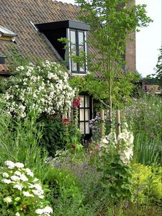 Bed and Breakfast Groenekan, Nederland Beds Online, Utrecht, B & B, Bed And Breakfast, Holland, Farmhouse Bed, Plants, Countries, Haus