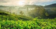 Munnar is the best honeymoon destination in Kerala. Explore Munnar with Kerala honeymoon packages now! Munnar, North India Tour, Honeymoon Special, Honeymoon Tour Packages, India Holidays, Kerala Tourism, Hill Station, Tourist Places, Travel Tours