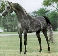 Elegant- This could be Whisper