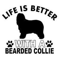 bearded collie vector - Google zoeken