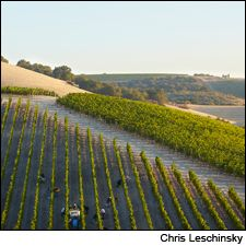11 Noteworthy California Reds | Tasting Highlights | News & Features | Wine Spectator