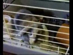 My cute rabbit locked up
