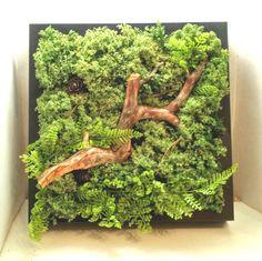 В наличии фитокартина из стабилизированного мха. Размер 25см х 25см. Кусеочек леса может быть отличным подарком. Не требует специального ухода. Растения в помещении благотворно действуют на наше самочувствие. Они поглощают лишние шумы и буквально насыщают находящихся рядом людей положительной энергией. #флорариум #флора #террариум #хавортия #лес #минисад #natura #forest #forestinthebottle #bottle #mossarium #moss #ecosystem #петербург #minigarden #флорариумспб #кактусы #флора #фитостена… Moss Art, Green Walls, Terrariums, Pink, Terrarium, Terraria