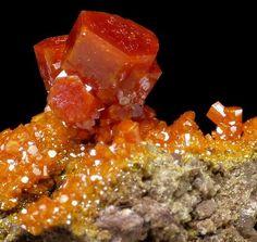 beautiful-minerals:  Vanadinite from Arizona, USA
