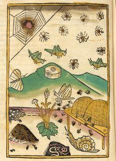 From a 1481 edition of Thomas, de Cantimpré, Das Buch der Natur (Book of nature)