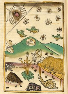 From a 1481 edition of Thomas, de Cantimpré, Das Buch der Natur (Book of nature)