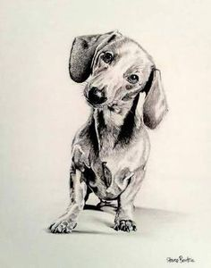 Image result for dachshund pencil drawings
