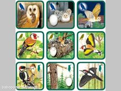 vtáky Puzzles For Kids, Worksheets For Kids, Games For Kids, Montessori Kindergarten, File Folder Activities, Paper People, Animal Antics, Forest Theme, Animal Habitats