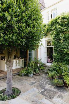 A London garden to envy Circular Lawn, York Stone, Small Flower Pots, London Garden, Spring Bulbs, Garden Architecture, Back Gardens, Outdoor Gardens, Trees And Shrubs