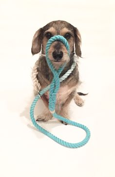 Hey, I found this really awesome Etsy listing at https://www.etsy.com/listing/215578159/slip-leash-dyed-slip-leash-ombre-leash
